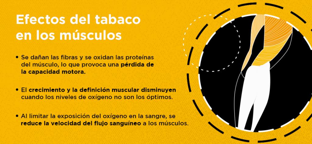 efectos del tabaco en la definicion muscular infografia