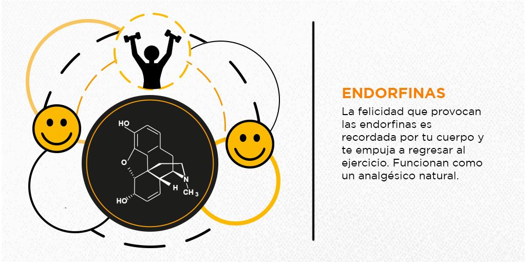 Endorfinas hormonas liberadas por ejercicios